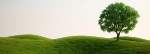 Architettura ambientale - risorse rinnovabili