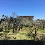 Nido - giardino degli ulivi asilo nido_01